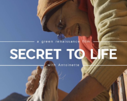 Secret to Life Green Renaissance